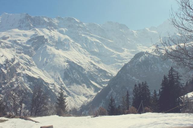 Swiss31